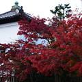 写真: 参道脇の紅葉