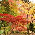 紫陽花園の紅葉