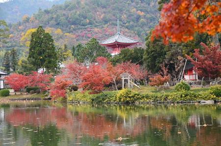 大沢の池の紅葉