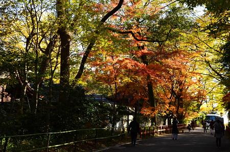 河合神社脇の色付き