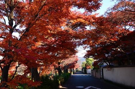 松ヶ崎疎水の紅葉