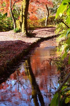 紅葉色に染まる小川