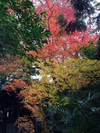 神明神社の紅葉