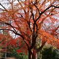 富小路口近くの紅葉
