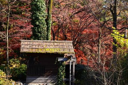 水車小屋を取り巻く紅葉