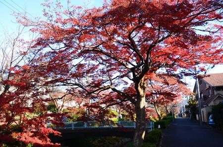 松ヶ崎疎水の紅葉景色