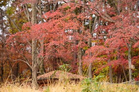 森の文庫上の紅葉