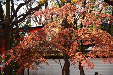 河合神社脇の紅葉