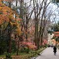 写真: 紅葉の参道