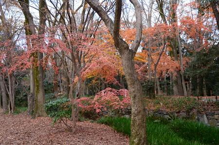 瀬見の小川脇の紅葉