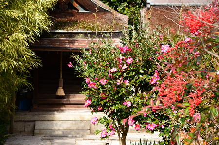 山茶花と南天の宗像神社