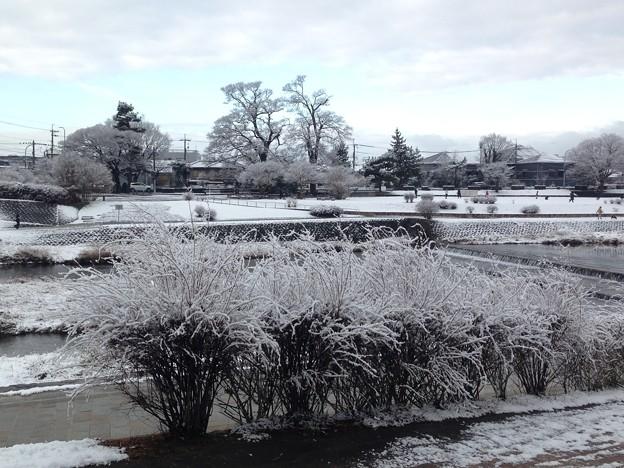 雪景色の賀茂川