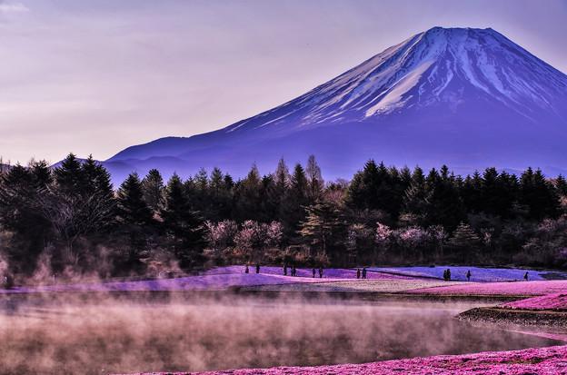 富士山麓の彩