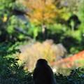 Photos: 里の眺め 秋色