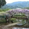 藤(西寒多田神社)_1868