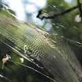Photos: 蜘蛛の巣_4914