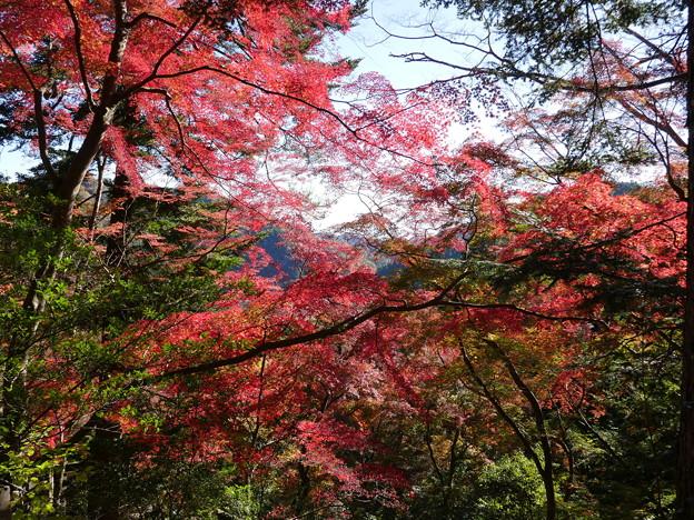 東郷公園171119-076
