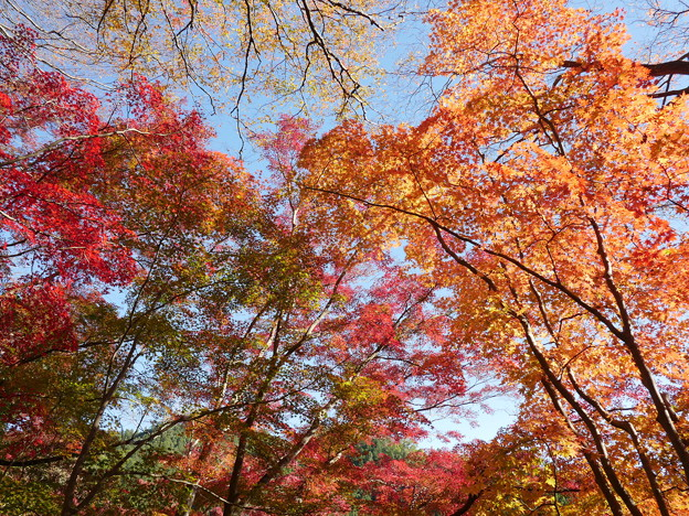 東郷公園171119-085