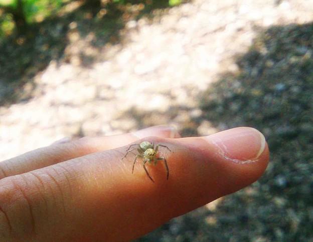 智光山公園 クモ