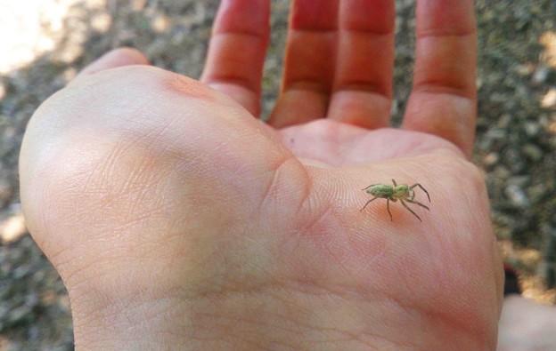 智光山公園 クモく