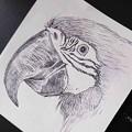 オウムのペン画