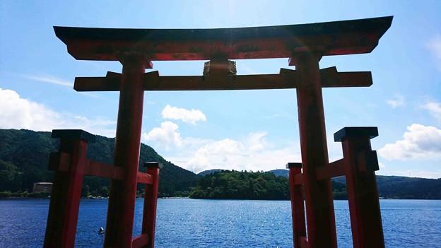 箱根神社 鳥居