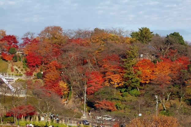 Photos: 西山公園