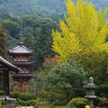 Photos: 三室戸寺3