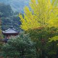 Photos: 三室戸寺4