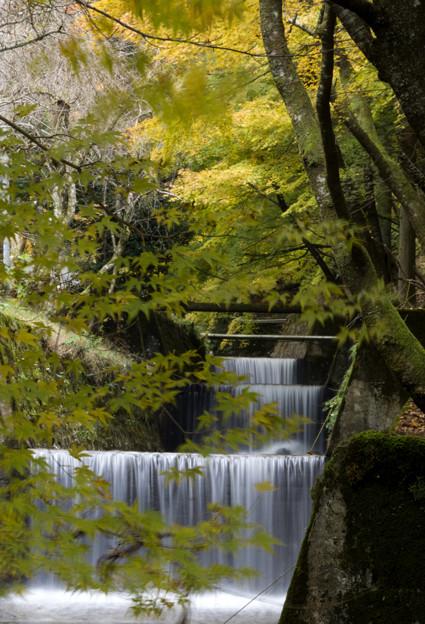 観音川と紅葉