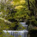 Photos: 観音川と紅葉