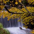 石観世音の秋
