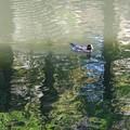 写真: 秋風の ふきぬけゆくや 佐竹池