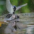 サンヨン で撮った 野鳥類-3