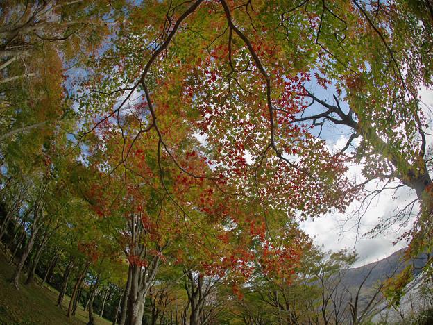 171113_箱根・湖尻_紅葉風景_E17111347978_MZD8FP_X8Ss