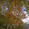 Photos: 171113_箱根・湖尻_紅葉風景_E17111347978_MZD8FP_X8Ss