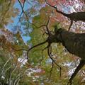 Photos: 171113_箱根・湖尻_紅葉風景_G171113L9493_MZD8FP_FH_for C-SG_FS2_X8Ss