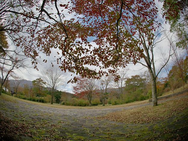 Photos: 171113_箱根・湖尻_紅葉風景_G171113L9506_MZD8FP_X8Ss