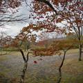Photos: 171113_箱根・湖尻_紅葉風景_G171113L9507_MZD8FP_X8Ss