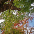 Photos: 171113_箱根・湖尻_紅葉風景_F171113G2865_MZD12ZP_X8Ss