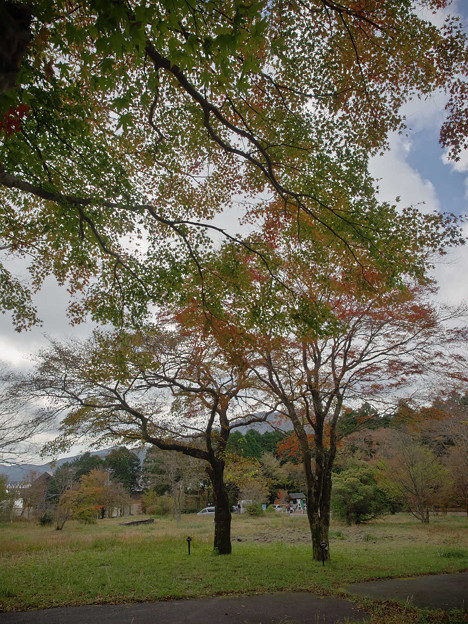 Photos: 171113_箱根・湖尻_紅葉風景_F171113G2875_MZD12ZP_X8Ss