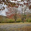 Photos: 171113_箱根・湖尻_紅葉風景_F171113G2877_MZD12ZP_X8Ss