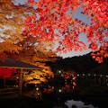 Photos: 171128_伊豆市・修善寺町・虹の郷_ライトアップ紅葉風景_F171128G3069_MZD12ZP_X8Ss