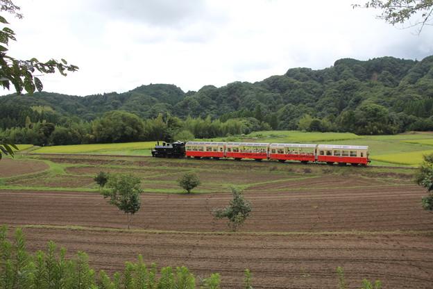写真: 里山トロッコ列車
