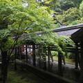 写真: 竜安寺