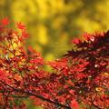 写真: 秋色