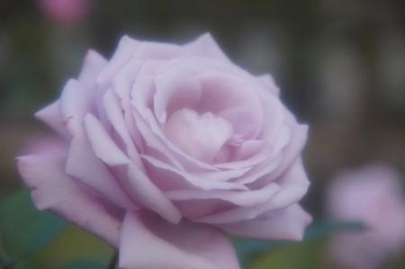 トワイス インナ ブルームーン  ソフトフィルター使用