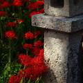 写真: 鰐鳴八幡宮の参道にて