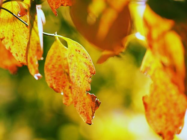 秋色みっけ