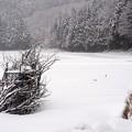 写真: そして冬、寒かぁ~--~